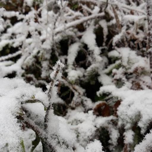 Chùm ảnh: Tuyết rơi phủ trắng Sa Pa, nhiều du khách thích thú chụp ảnh