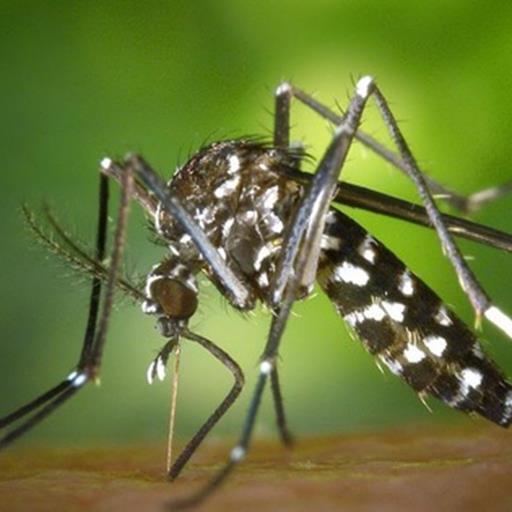 Hóa ra tất cả những điều trước giờ bạn làm để tránh muỗi đều có thể sai cả