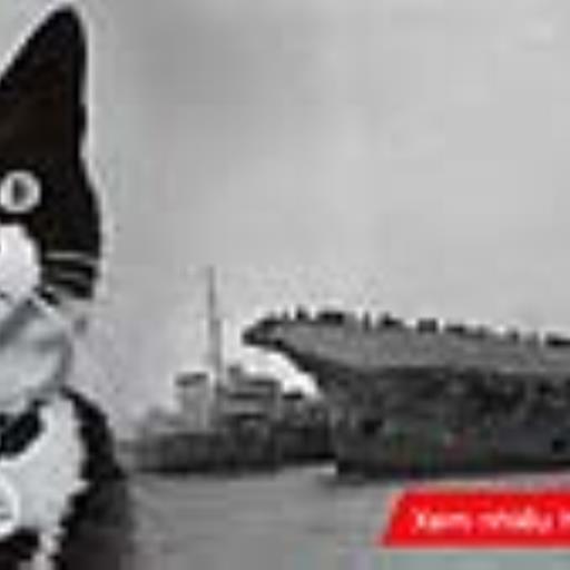 Bí ẩn không có lời giải về con mèo sống sót qua ba lần tàu chiến bị đánh chìm