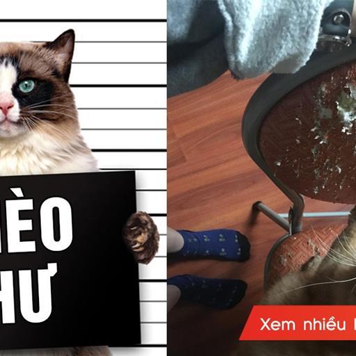 """Đây là những gì khoa học đã lý giải về """"thói hư tật xấu"""" của chú mèo nhà bạn"""